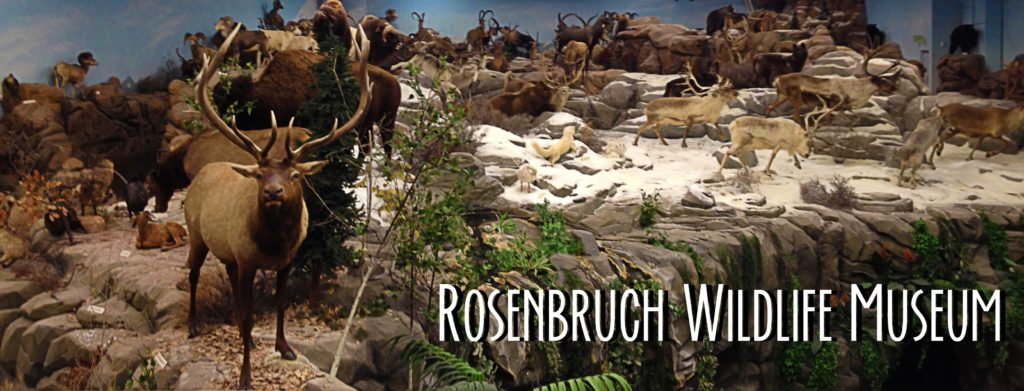 title card showing the Rosenbruch wildlife museum main hall.