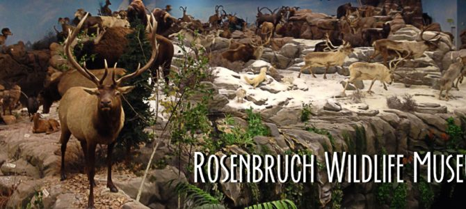 Rosenbruch Wildlife Museum in St. George