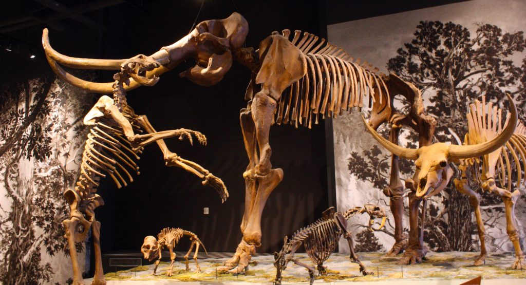 Skeletons in the Natural History Museum of Utah